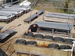 Upwellers and Tanks Are Cleaned and Maintained